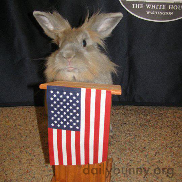 Bunny Gives His Own State of the Union Address, Demands More Treats and Cuddles