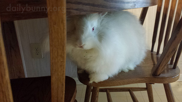 Bunny Lurks Under the Table Until the Veggies Are Put Down