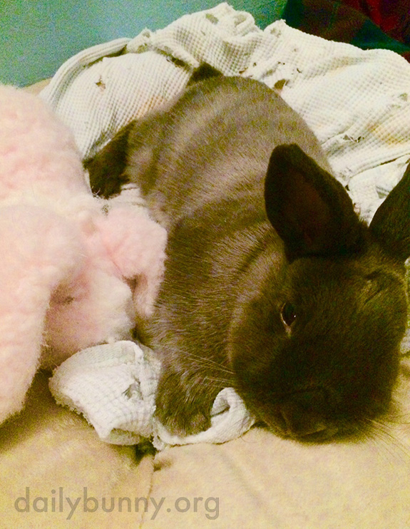 Bunny Relaxes in Bed with a Well-Worn Blanket and Stuffed Animal