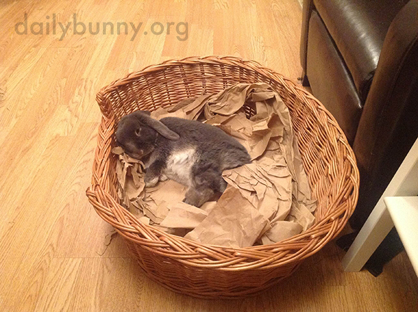 Bunny Relaxes in His Basket