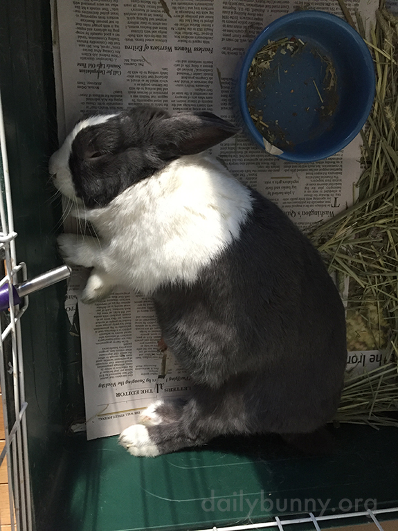 Bunny Relaxes in a Sunbeam