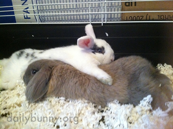 Bunny Relaxes with an Arm Around His Friend