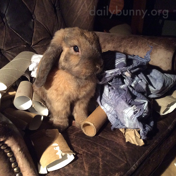 Bunny Sits Among Her Favorite Chewable Toys