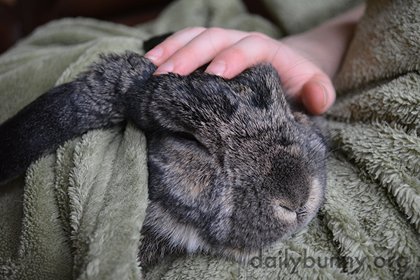 Bunny Snuggles Up with Her Human