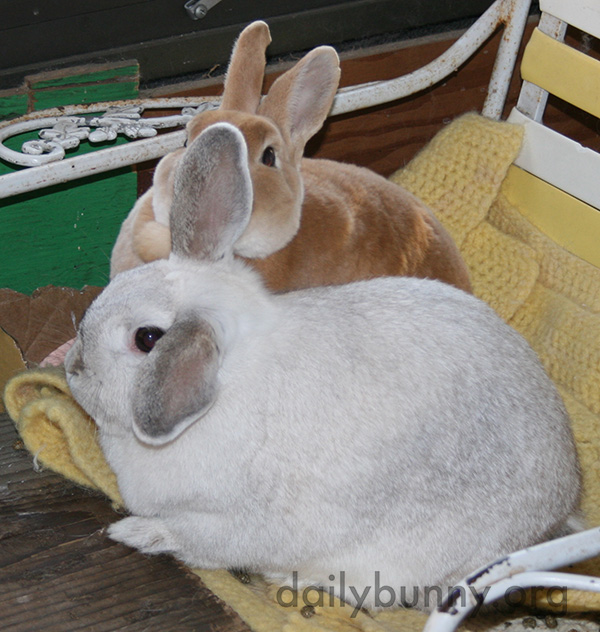 Inseparable Bunnies Are Inseparable 1