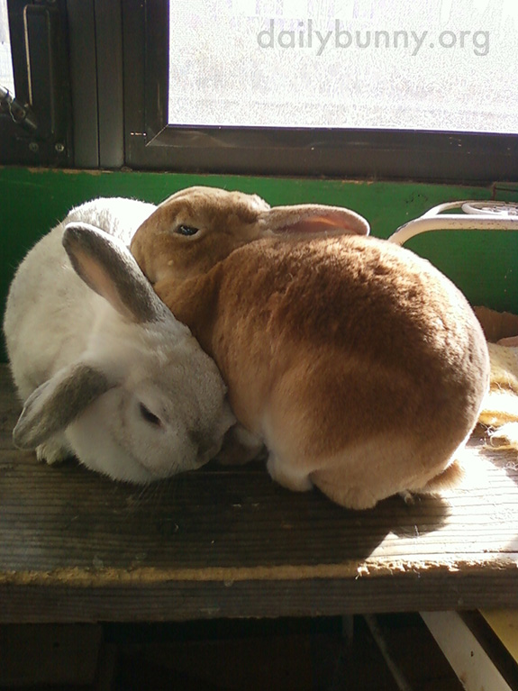 Inseparable Bunnies Are Inseparable 2