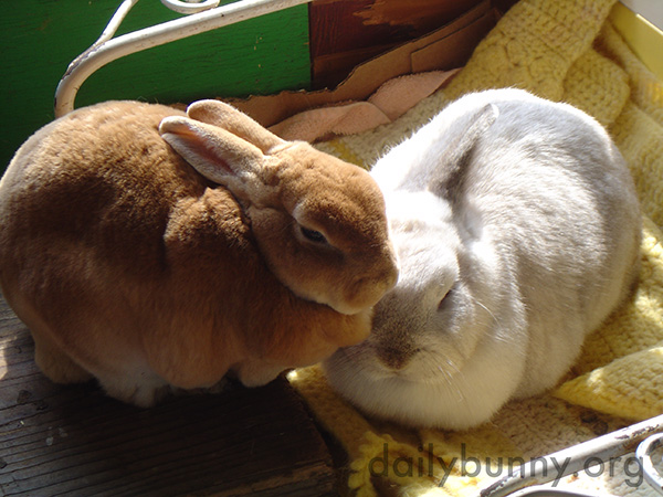 Inseparable Bunnies Are Inseparable 3