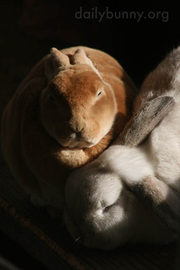 Inseparable Bunnies Are Inseparable 5