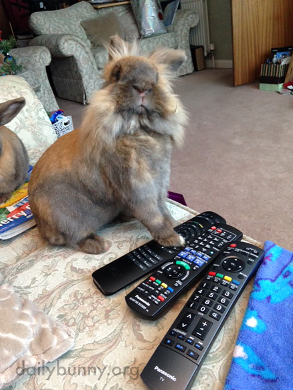 It's My Turn with the Remote, Human, and We're Watching the Animal Channel