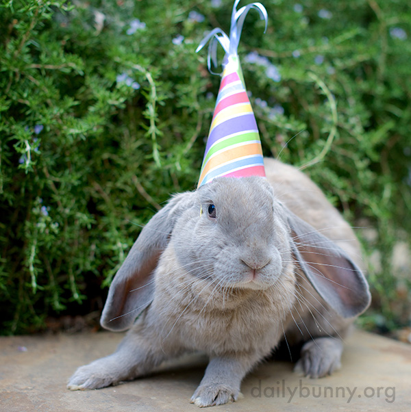 It's the Daily Bunny's 2015 New Year's Roundup! 1