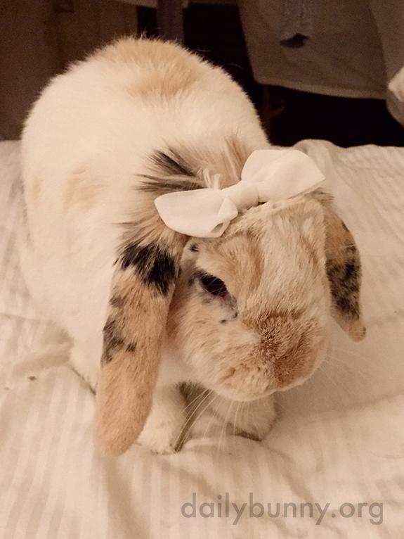 Pretty Bunny Wears a Pretty Bow in Her Fur