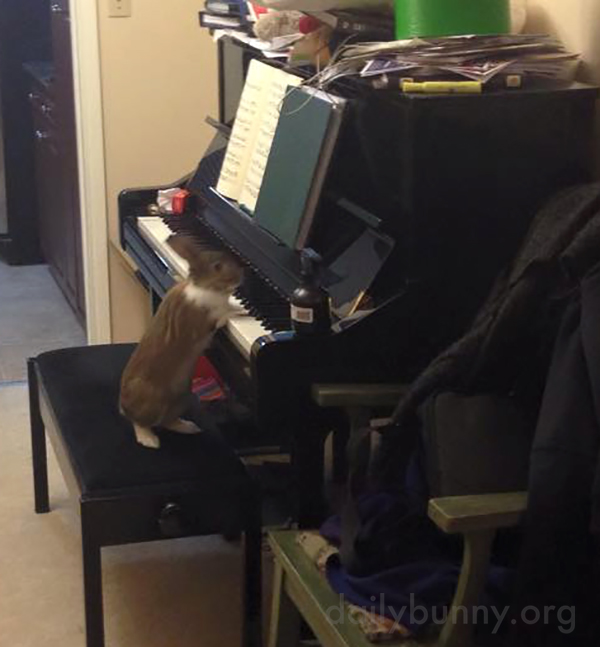 Virtuoso Bunny Plays the Piano 1