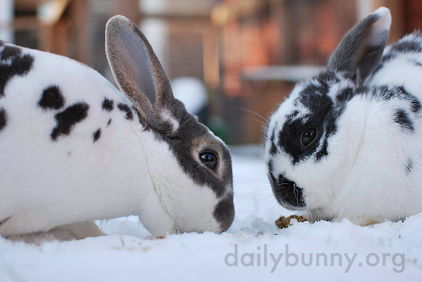 Bunnies Explore the Snow 1