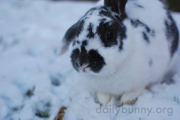Bunnies Explore the Snow 2