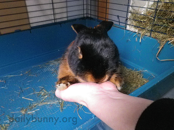 Bunny Enjoys Hand Cuddles with His Human 1