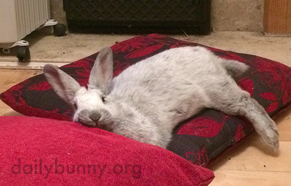 Bunny Flops Out Over a Pillow