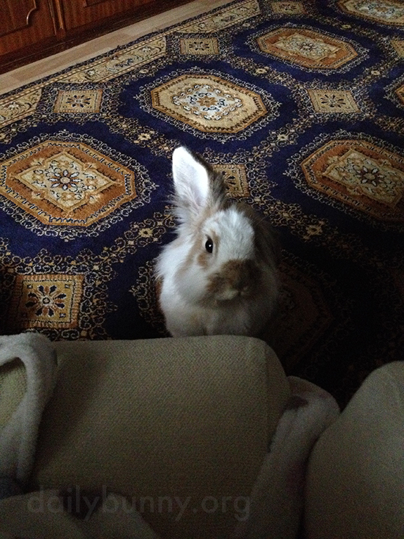 Bunny Has Caught a Whiff of the Banana His Human's Enjoying