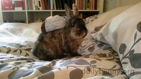 Bunny Has a Tiny Backpack