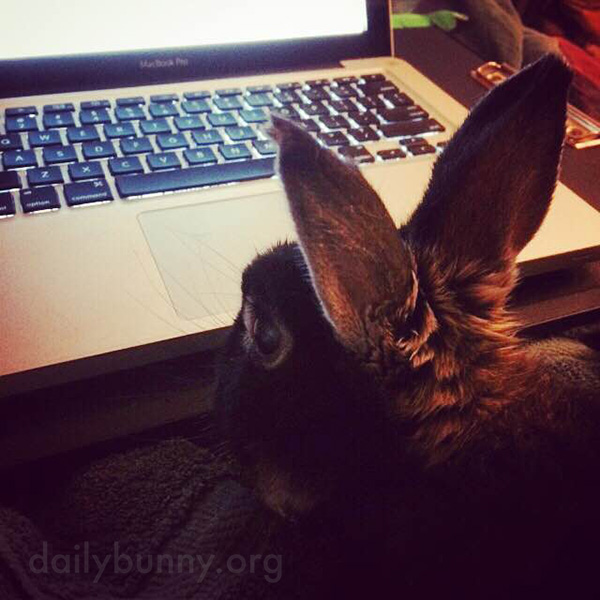 Bunny Helps His Human with Homework