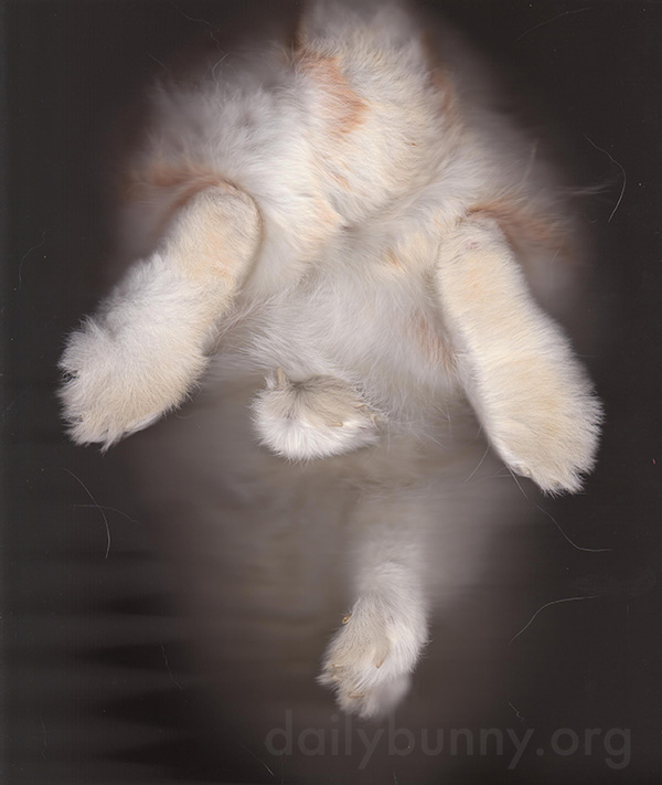 Bunny Scan