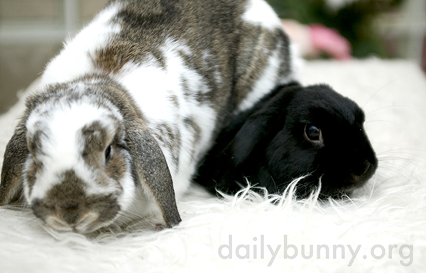 Bunny Sits on His Friend
