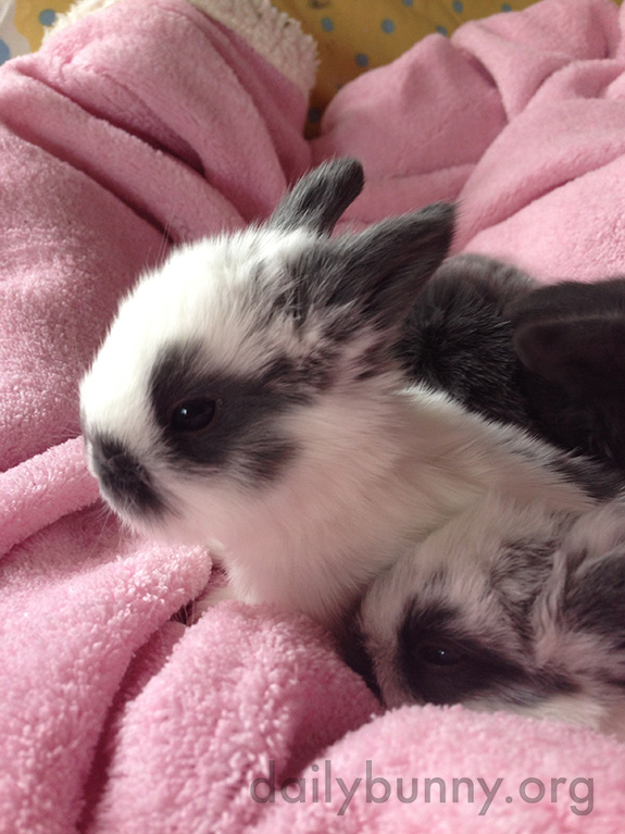 Bunny Wakes Up from a Nap with Her Siblings Ready to Explore 1