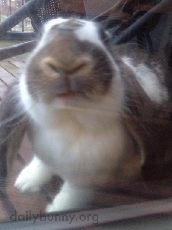 Bunny Washes the Windows 1