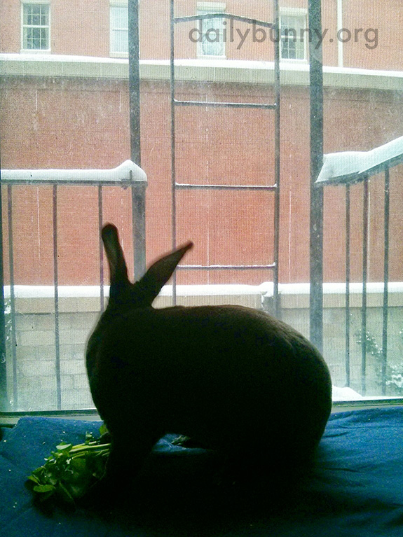 Bunny Watches the Snow from the Comfort of the Indoors