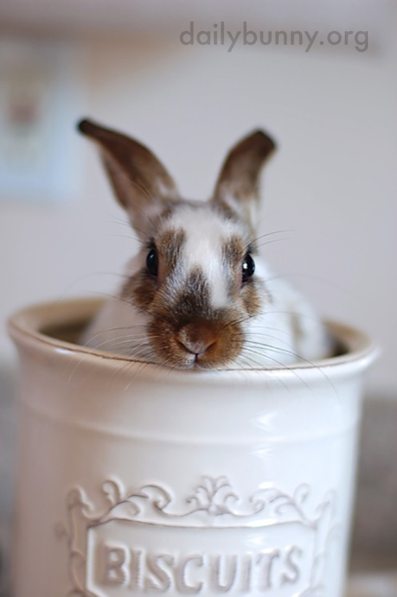 Bunny's in the Biscuit Jar