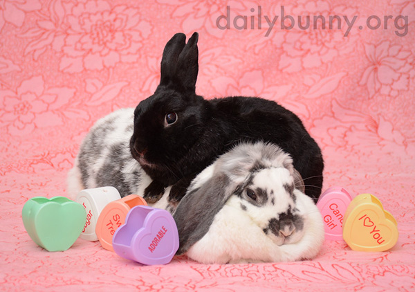 It's the Daily Bunny's Valentine's Day 2015 Roundup! 1