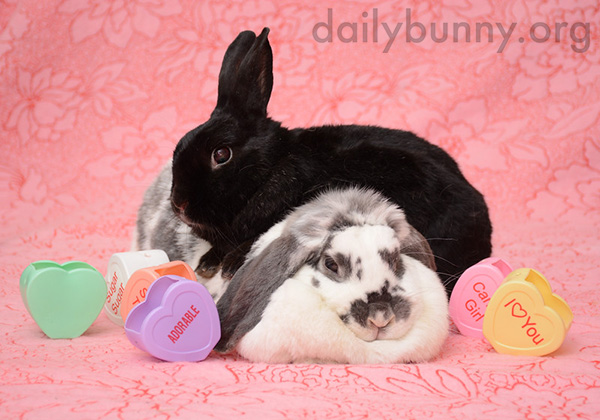 It's the Daily Bunny's Valentine's Day 2015 Roundup! 2