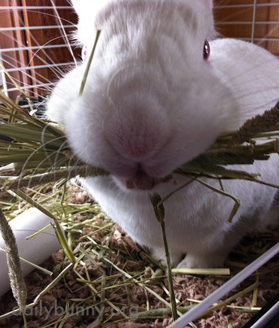 Are You Going to Eat All That Hay, Bunny?