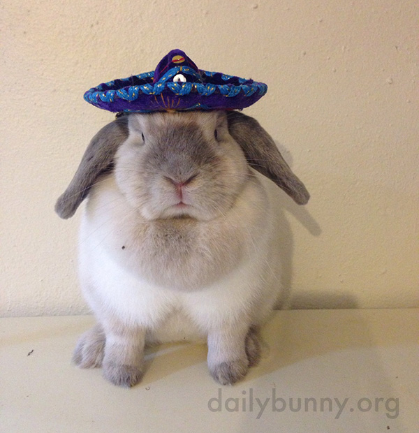 Bunny Can Rock a Tiny Sombrero