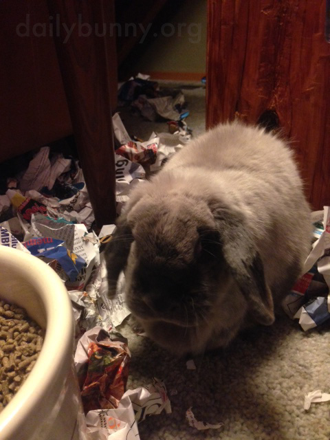 Bunny Has Lots of Crumpled Paper to Toss About 1