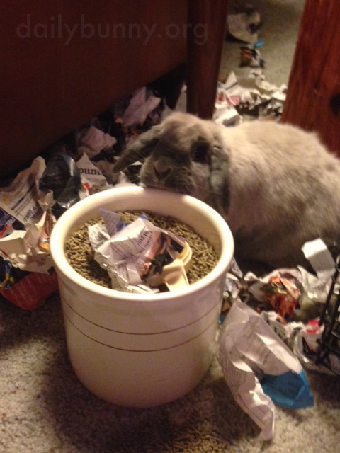 Bunny Has Lots of Crumpled Paper to Toss About 2