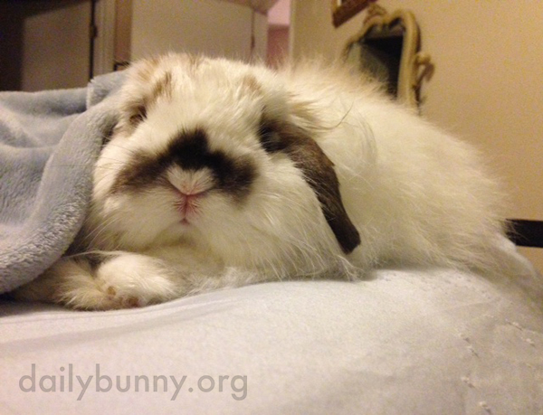 Bunny Is Comfy and Does Not Want to Get Up Yet