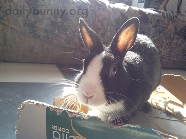Bunny Is Photographed in the Act of Ripping Up Her Box