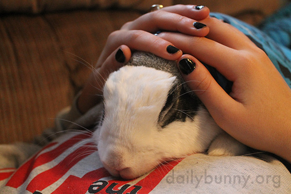 Bunny Is So Relaxed During Cuddle Time with Human
