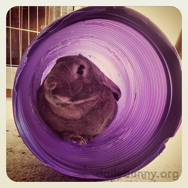 Bunny Relaxes in His Tunnel