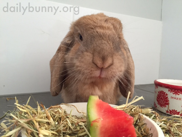 Bunny Samples Some Watermelon 2