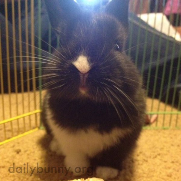Bunny's Markings Indicate Exactly Where to Apply Nose Rubs