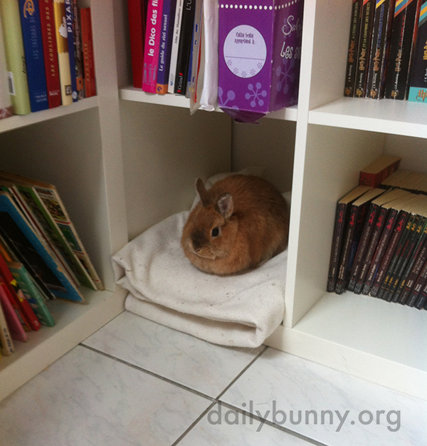 This Bookshelf Has a Place Reserved Just for Bunny