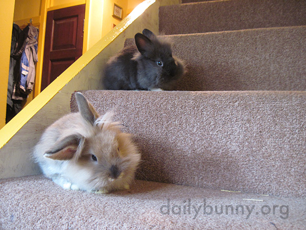 Tollkeeper Bunnies Require Payment in Treats Before Human Can Go Upstairs