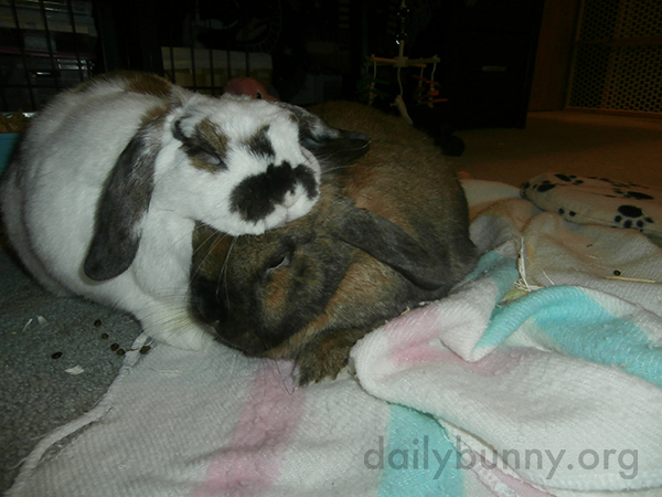 Bunnies Enjoy a Quiet, Snuggly Moment 1
