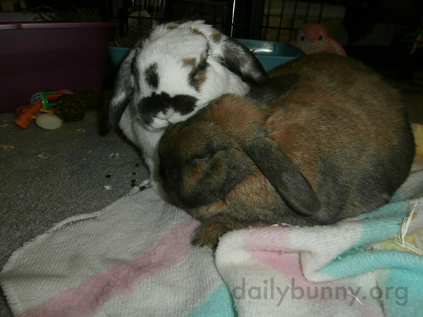 Bunnies Enjoy a Quiet, Snuggly Moment 3