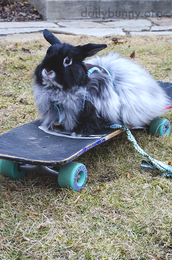 Bunny Can Show the Kids at the Skate Park a Thing or Two