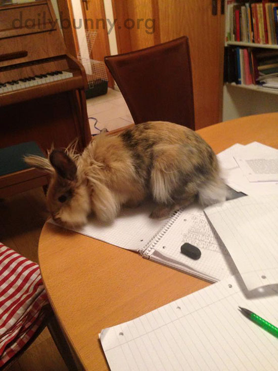 Bunny Checks His Human's Homework for Errors