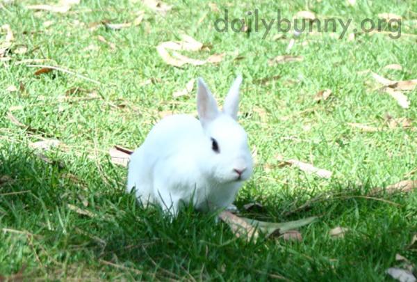 Bunny Explores the Grassy Park 1