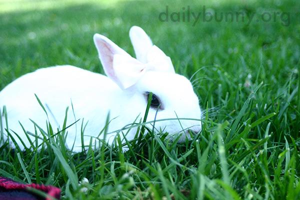 Bunny Explores the Grassy Park 2