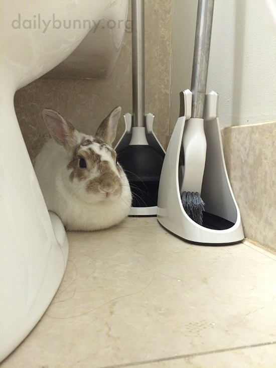 Bunny Has Found a Quiet Spot Out of the Way